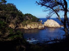 Point Lobos 3