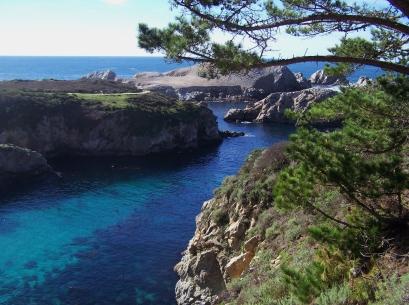 Point Lobos 5